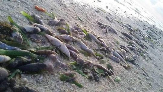 Tàu Trung Quốc đổ hóa chất giết cá quanh đảo Thị Tứ? - 1