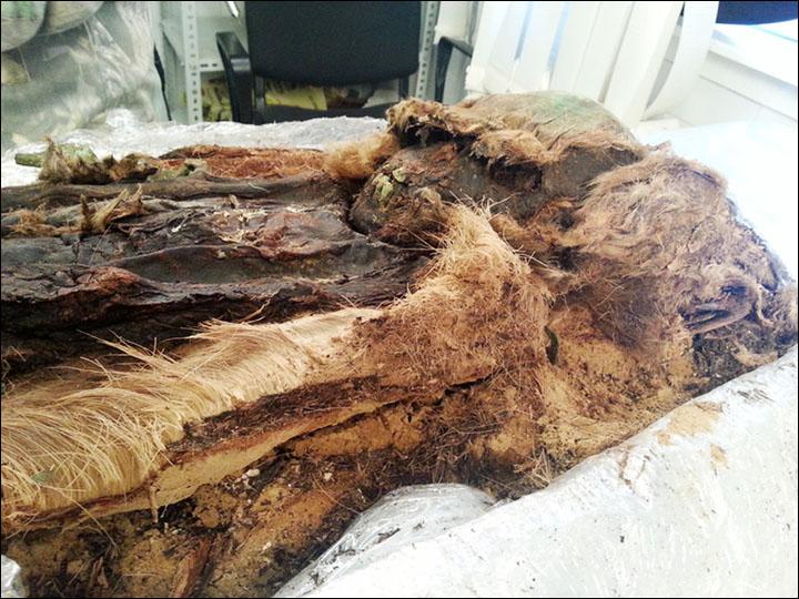 Truy tìm họ hàng của cậu bé xác ướp 800 năm tuổi - 1