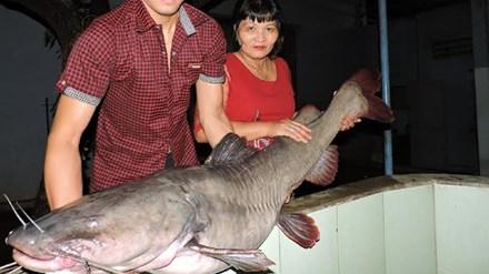 Bắt được cá lăng khủng nặng gần 50 kg - 1
