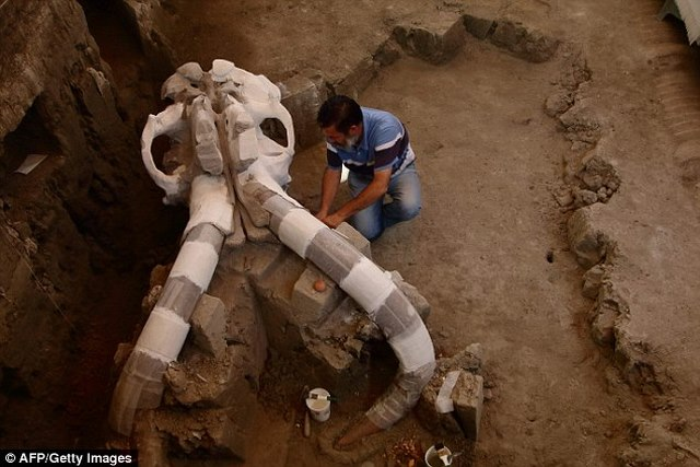 Hóa thạch voi ma mút vạn năm tuổi nặng 10 tấn ở Mexico - 1
