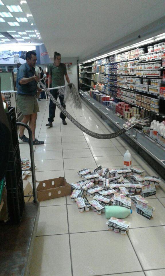 """Tá hỏa thấy trăn """"khủng"""" châu Phi trong tủ mát siêu thị - 1"""