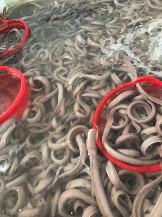 Hái ra tiền nhờ đánh bắt lươn, người Việt ghê nhưng dân Nhật mê - 1
