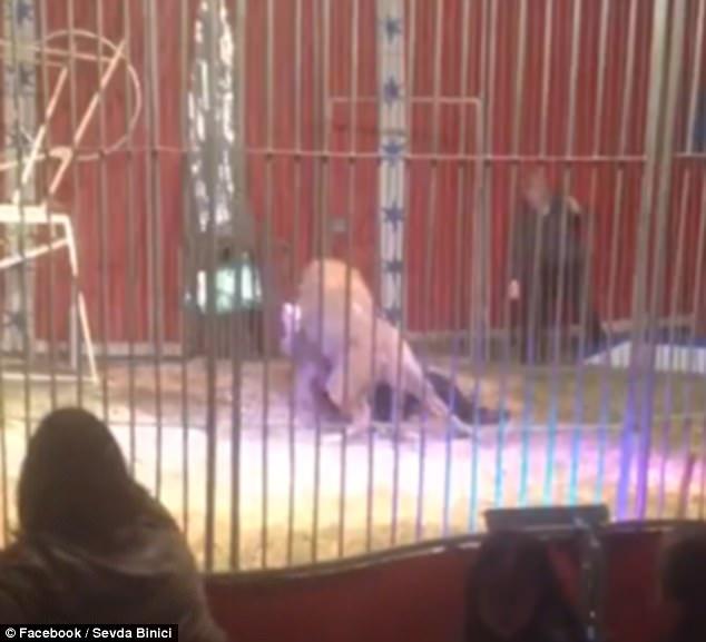 Pháp: Sư tử cắn cổ người, lôi xềnh xệch trong rạp xiếc - 1