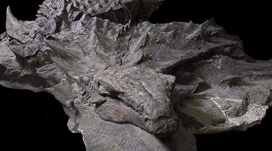 Hóa thạch khủng long nguyên vẹn hơn 100 triệu năm - 1