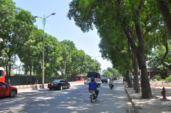 Chặt 1.300 cây xanh: Sở Xây dựng Hà Nội nói gì? - 1