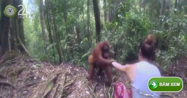 Indonesia: Đười ươi giữ rịt tay cô gái, định bắt cóc