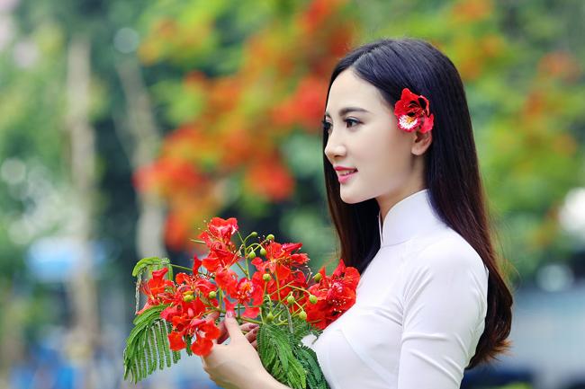 Cứ mỗi độ hè về, màu hoa phượng lại nhuốm đỏ khắp các con phố