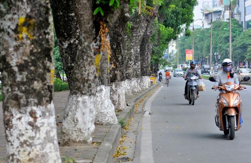 Những tuyến đường HN bị chặt cây xanh: Ngày ấy - Bây giờ - 1