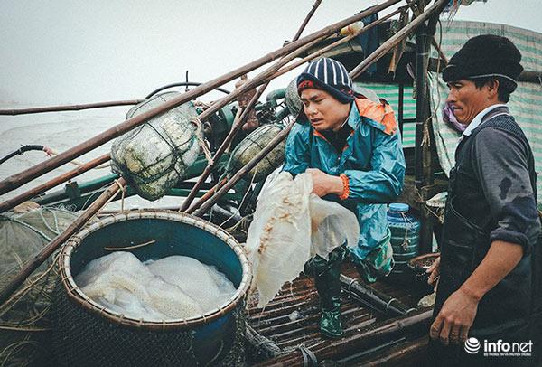 Thanh Hóa: Ngư dân Hải Hòa vào mùa đánh bắt sứa - 1