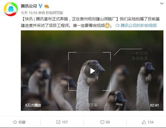 Alibaba nuôi heo, nay đến lượt Tencent tuyên bố nuôi... ngỗng - 1