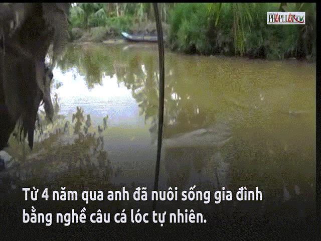 Cần thủ câu cá lóc 'bách phát bách trúng' ở Cà Mau