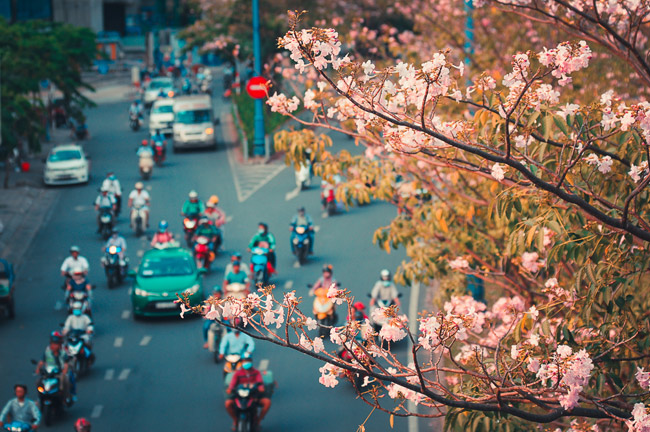 Không ngờ giữa Sài Gòn lại có những con đường hoa đẹp đến thế này! - 1
