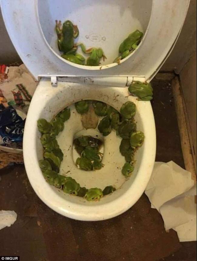 Hãi hùng với những sinh vật kinh dị xuất hiện trong toilet - 1