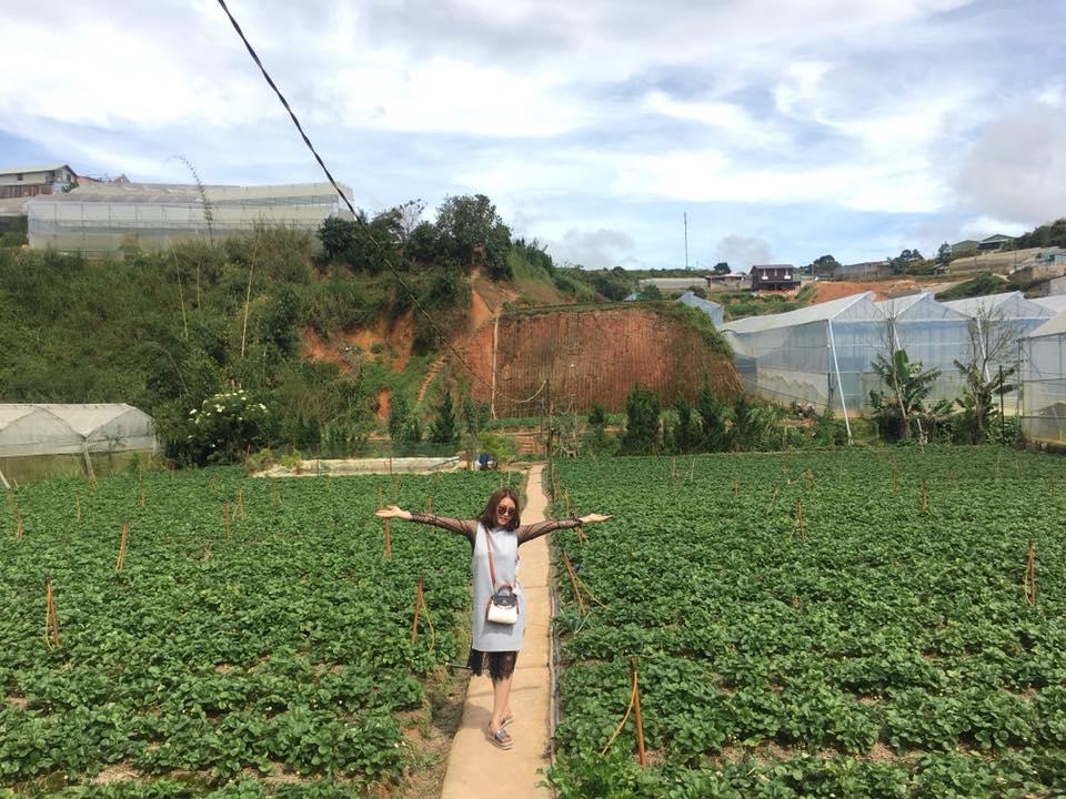 Lên Đà Lạt một ngày làm nông dân thu hoạch dâu tây - 1