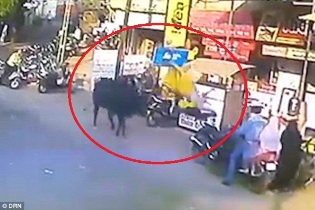 """Ăn mặc khiến bò """"ngứa mắt"""", người phụ nữ Ấn Độ bị húc tung lên cao - 1"""