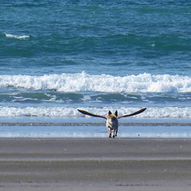 Có cánh rồi, bay lên thôi nào.