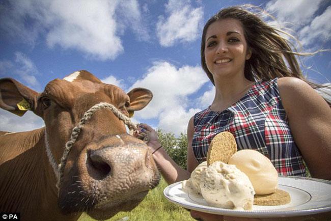 Mùa hè này bạn có dám ăn thử kem được làm từ nội tạng động vật không? - 1