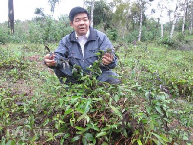 """Những """"phù thủy"""" nông dân đất Việt, cứ trồng cây là cây... """"đẻ ra vàng"""""""