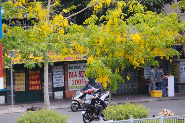 """""""Thành phố những ngày này đẹp quá. Sắc vàng của hoa khiến tôi cứ nao nao, cảm thấy nhịp sốngSài Gòn như chậm lại, thư thả không vướng lo toan"""", anh Trần Đúng (quận 3) nói."""