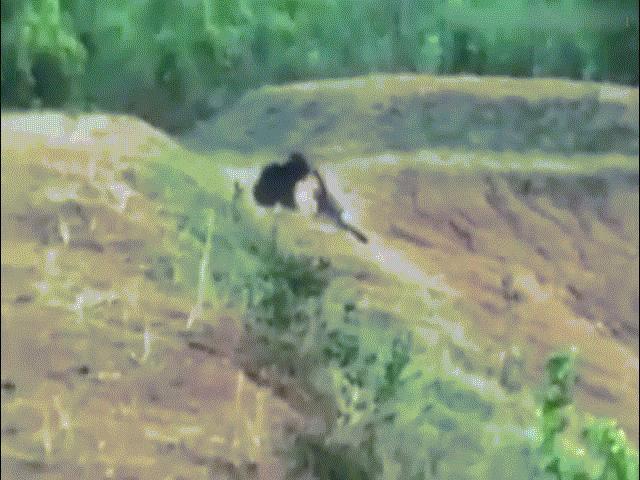 """Ấn Độ: Dừng xe chụp ảnh """"tự sướng"""" cạnh gấu đen, bị cắn xé chết thảm"""