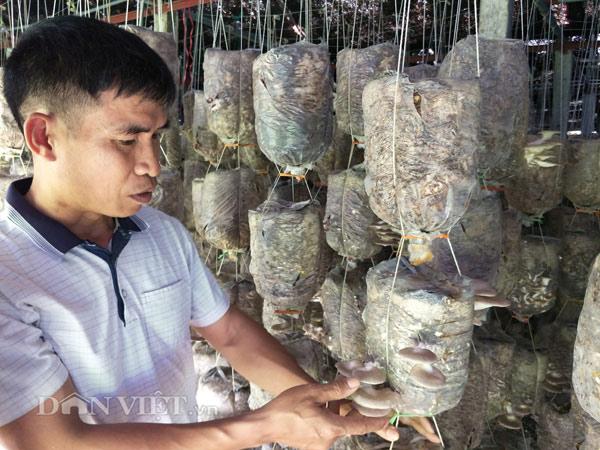 CLIP: Chiêm ngưỡng siêu trang trại nấm doanh thu 2 tỷ ở Ninh Bình - 1