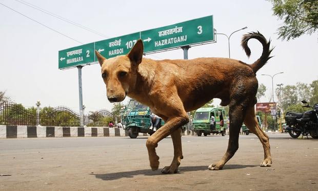 """Chó hoang """"nổi loạn"""", giết 6 trẻ em Ấn Độ - 1"""