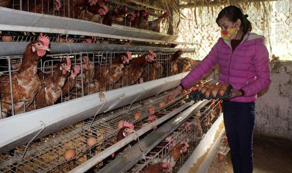 """Nuôi gà siêu trứng kiểu """"ấm đông, mát hè"""" kiếm trăm triệu mỗi năm - 1"""