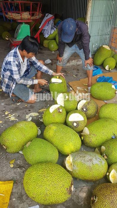 Vào mùa thu hoạch rộ, giá mít Thái siêu sớm giảm sâu - 1