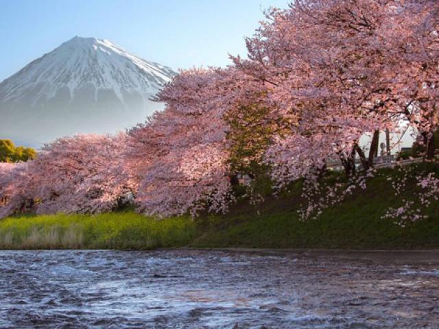 Loạt ảnh hoa anh đào đẹp như tiên cảnh khiến du khách muốn đến Nhật Bản ngay lập tức