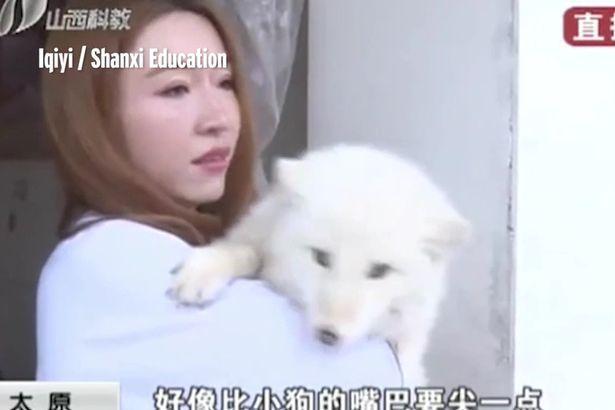 Mua chó Nhật về nuôi gần 1 năm mới phát hiện là con khác - 1