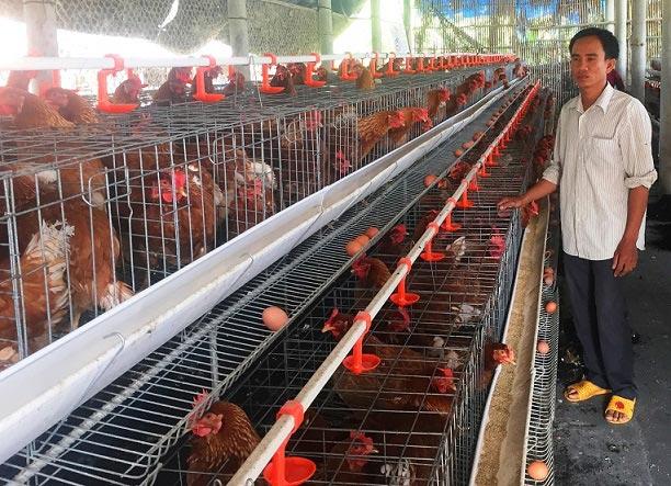 Cho gà siêu trứng nghe nhạc trữ tình, thu nhập 1,5 tỷ đồng/năm - 1