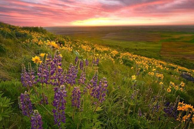 Lạc lối giữa những thung lũng hoa đẹp nhất thế giới, tha hồ sống ảo - 1