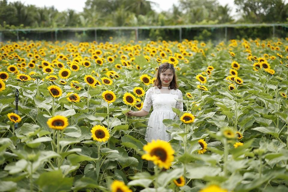 'Phát cuồng' với cánh đồng hoa đẹp như cõi mơ ở Tiền Giang - 1
