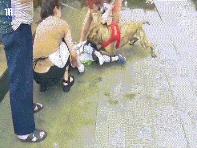 Kinh hãi cảnh cậu bé 4 tuổi bị chó pit bull tấn công ở TQ