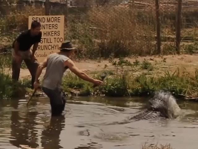 Suýt mất cánh tay vì livestream ngay gần cá sấu khổng lồ