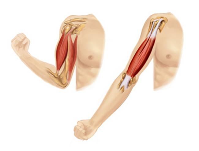 Nếu không muốn gặp họa, nên tránh massage những vị trí này trên cơ thể - 1