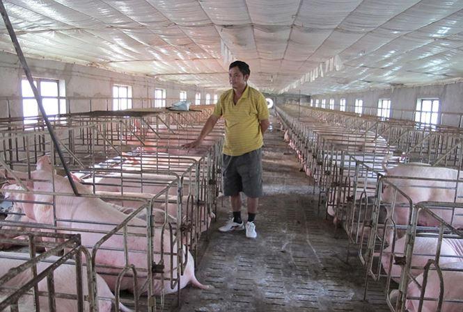 Giá lợn tăng bất thường: Nguy cơ lợn Trung Quốc tràn vào Việt Nam - 1