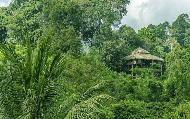 Tận hưởng mùa hè tuyệt vời trên những ngôi nhà trên cây ở Chiang Mai - 1