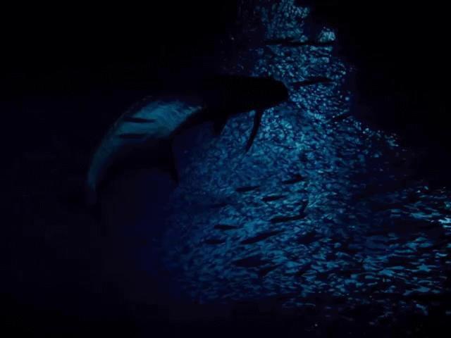 """""""Sát thủ"""" đại dương săn mồi với tốc độ kinh ngạc"""