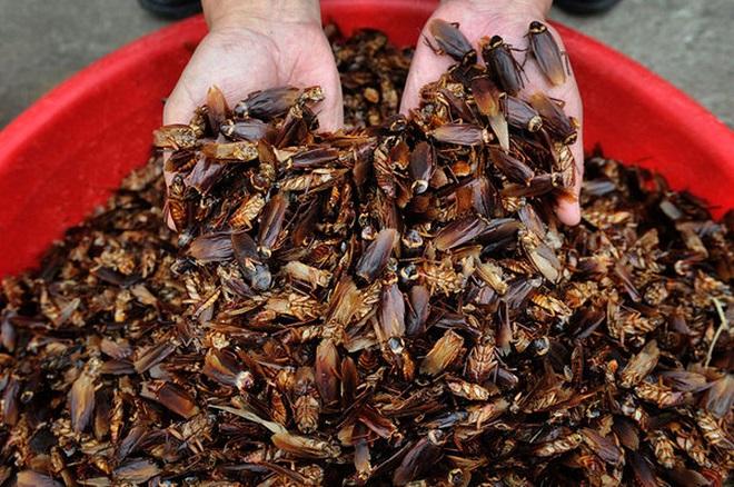 Trang trại gián mọc lên như nấm ở TQ, nuôi hàng chục tỷ con - 1