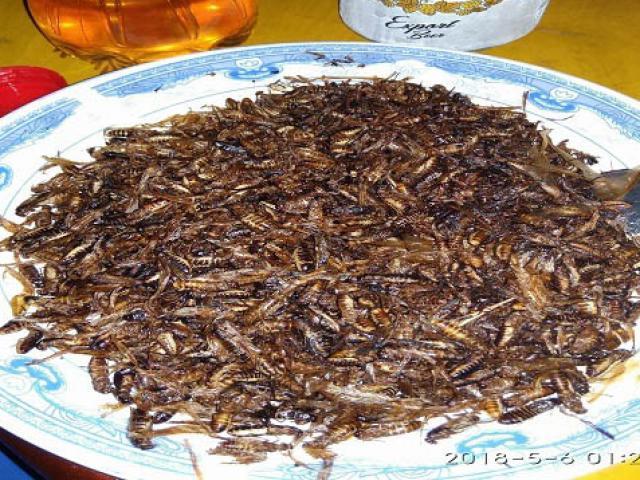 """Đặc sản côn trùng """"đỉnh nhất"""" tròn nịch ăn là nghiện ở vùng Tây Bắc"""