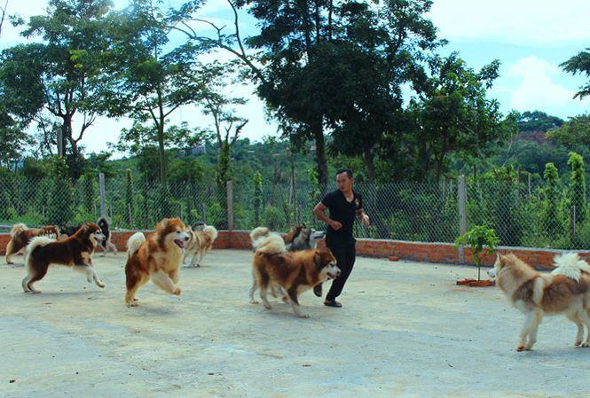 Chó ngoại thượng sơn - 1