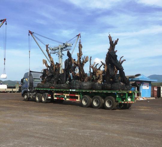 """Công ty Hải Sơn lên tiếng về việc vận chuyển các cây """"tiểu quái thú"""" - 1"""