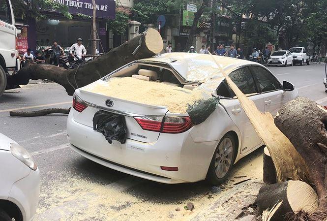 Vụ xe Lexus bị cây đè bẹp: Thiệt hại 300 triệu đồng? - 1