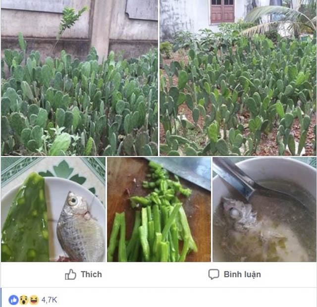 Kỳ lạ món canh xương rồng trong bữa cơm của người dân Bình Định - 1