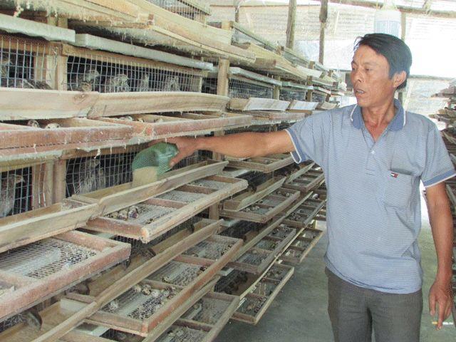 Cả làng giàu nhờ nuôi loài chim chỉ to bằng nắm tay con nít - 1
