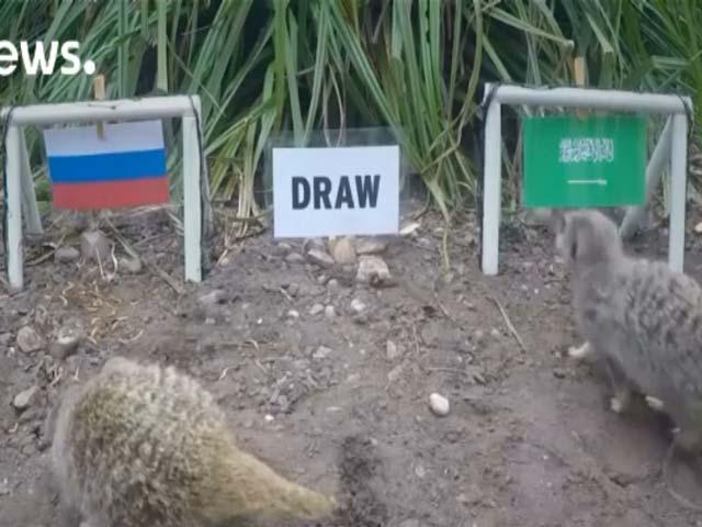 'Thánh' chồn dự đoán Nga thắng trận mở màn World Cup