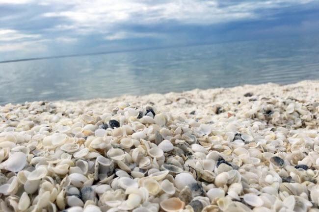 Bãi biển vỏ sò, Australia: Do độ mặt của nước biển cao, kẻ thù tự nhiên của loài sò ở đây không thể sống sót, khiến chúng phát triển rất nhanh. Vỏ của chúng đã tạo nên sự đặc biệt cho bãi biển này.