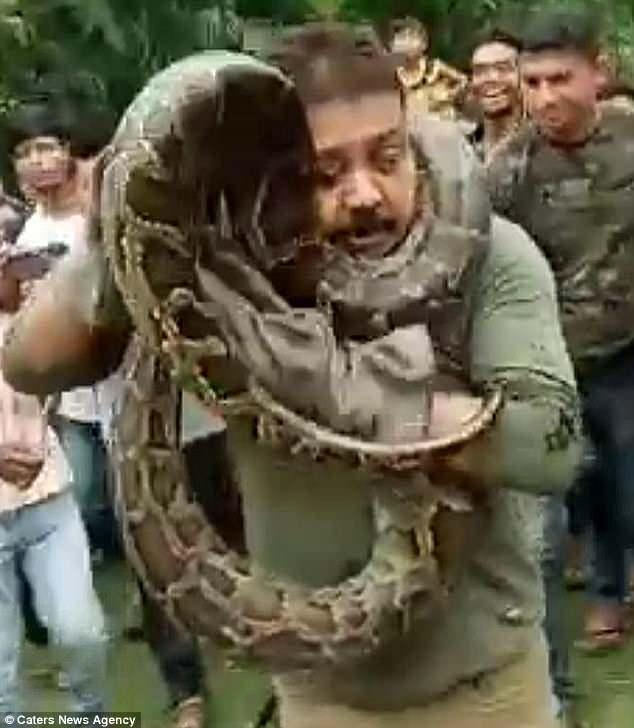 Trăn khổng lồ dài 10 mét siết cổ người đàn ông Ấn Độ - 1