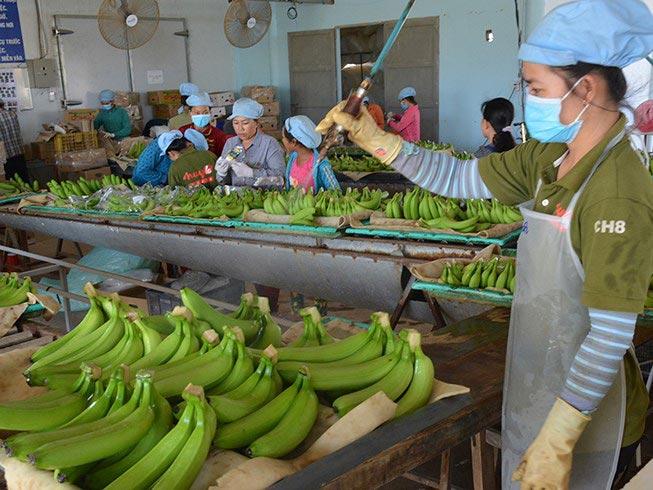 Mỹ-Trung ăn miếng trả miếng: Hàng Việt bị vạ lây? - 1